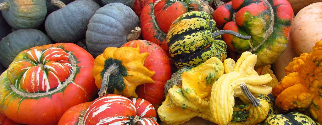 Eat - Produce Pumpkins