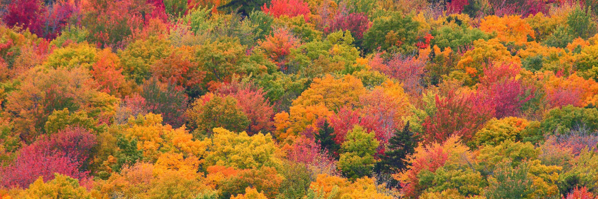 Fall Foliage Rockwood Maine Risteen Bahr