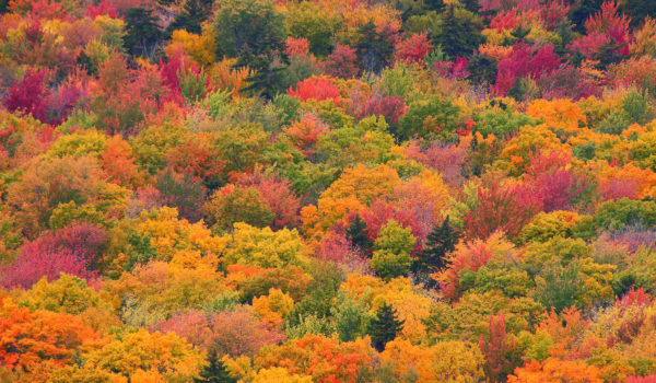 Fall Foliage Rockwood Maine Risteen Bahr